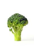 Fresh green broccoli Stock Images