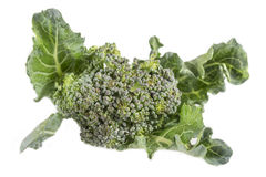 Fresh green broccoli on white. Background Stock Image