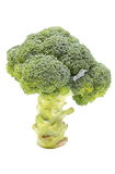 Fresh green broccoli on white background. Fresh raw green whole broccoli isolated on white background Stock Photos