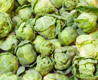 Fresh green Brussel Sprouts. Background or texture of fresh green Brussel Sprouts Royalty Free Stock Images