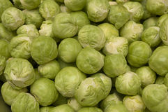 Fresh green Brussels sprouts. A box with plenty of Brussels sprouts photographed at farmer's/vegetable market using soft lighting. Sharp image, horizontal Stock Image