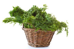 Fresh green bunch of dill Royalty Free Stock Photography