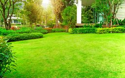 Fresh green Burmuda grass smooth lawn as a carpet with curve form of bush, trees on the background, good maintenance lanscapes in. A luxury house`s garden under royalty free stock photography