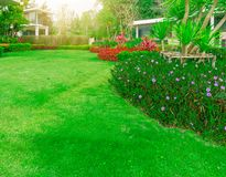 Burmuda grass, smooth lawn in good maintenance lanscapes with curve form of bush, trees on the background. Fresh green Burmuda grass smooth lawn as a carpet with royalty free stock images