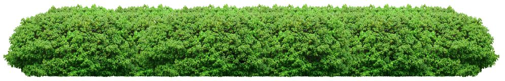 Fresh green bush isolated on white background Stock Photo