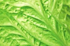 Fresh green cabbage background. Close up fresh green cabbage background Royalty Free Stock Photos