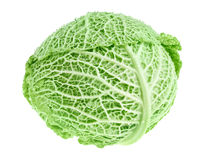 Fresh green cabbage head Royalty Free Stock Image