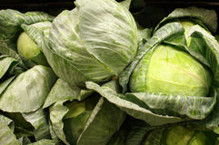 Fresh Green Cabbage Heads. Fresh green cabbage head offered for sale at a market royalty free stock images