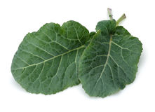 Fresh Green Cabbage Leaf stock photo