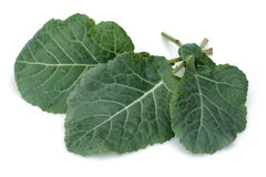 Fresh Green Cabbage Leaf Stock Image