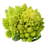 Fresh green cabbage romanesco, Brassica oleracea Royalty Free Stock Images