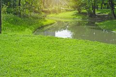 Fresh green carpet grass yard, smooth lawn in a beautiful garden and good care landscaping, beside a curve long lake and trees. Under sunshine morning in a stock photos