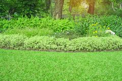 Fresh green carpet grass yard, smooth lawn in beautiful garden and good care landscaping in the public park. Fresh green carpet grass yard, smooth lawn in stock photography