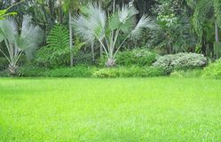 Fresh green carpet grass yard, smooth lawn in a beautiful palm trees garden and good care landscaping in the public park. Fresh green carpet grass backyard stock photos