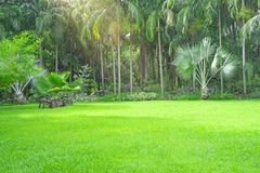 Fresh green carpet grass yard, smooth lawn in a beautiful palm trees garden and good care landscaping in the public park. Fresh green carpet grass backyard stock photo