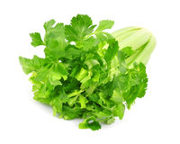 Fresh green celery Royalty Free Stock Image