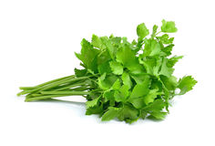 Fresh green celery isolated on white background Stock Photos
