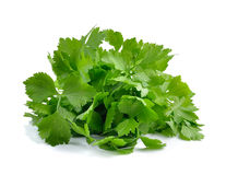 Fresh green celery isolated on white background Stock Image
