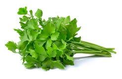 Fresh green celery isolated on white background Stock Photos