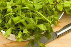 Fresh green celery leaves Royalty Free Stock Photography