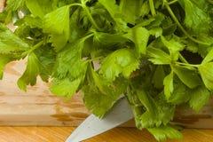 Fresh green celery leaves Stock Images
