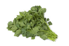Fresh green celery leaves Royalty Free Stock Photo
