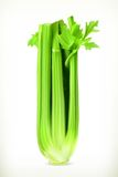 Fresh green celery Royalty Free Stock Photography