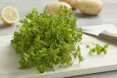 Fresh green chickweed Stock Images