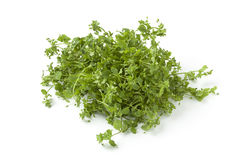 Fresh green chickweed Royalty Free Stock Photos