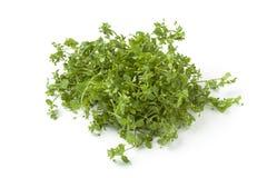 Fresh green chickweed Royalty Free Stock Photos