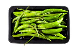 Fresh green chili Stock Image