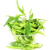 Fresh green chili pepper on pure white background Stock Image
