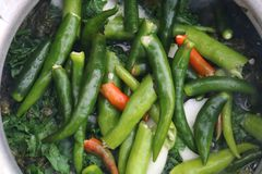 Fresh Green Chilies In Cooking Curry stock photography