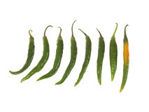 Fresh Green Chillies Royalty Free Stock Images
