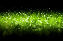 Fresh green christmas grass Royalty Free Stock Photography
