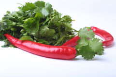 Fresh green cilantro, coriander leaves and chili pepper isolated on white bacground. Stock Images