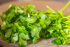 Fresh green cilantro, coriander leaves on wooden surface. Close up royalty free stock photography