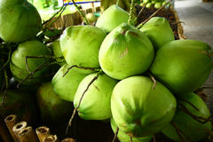 Fresh green coconut fruit Stock Photography