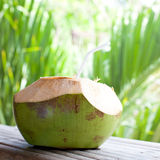 Fresh green coconut Royalty Free Stock Image