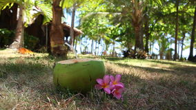 Fresh green coconut on tropical beach stock video