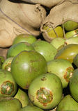 Fresh green coconuts. At the market Royalty Free Stock Images