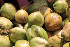 Fresh green Coconuts Stock Images