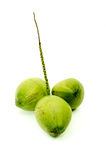 Fresh green coconuts. Green coconut sweet perfume  on white background Royalty Free Stock Photos