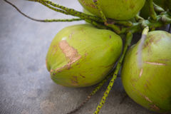 Fresh green coconuts. On the concrete floor Stock Image