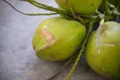 Fresh green coconuts Stock Image
