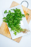 Fresh green Coriander leaves heap Stock Images