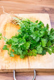 Fresh green Coriander leaves heap Royalty Free Stock Image