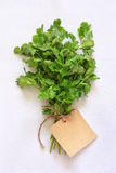 Coriander. Stock Photos