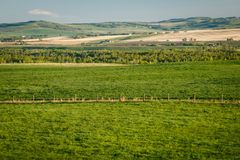 Fresh green countryside of Southern Alberta, province of Canada. Beatiful morning in canadian farmland, foothills of Canadian Rockies royalty free stock image