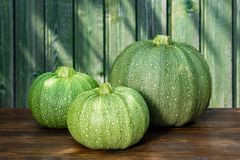 Fresh green courgettes of round shape royalty free stock images